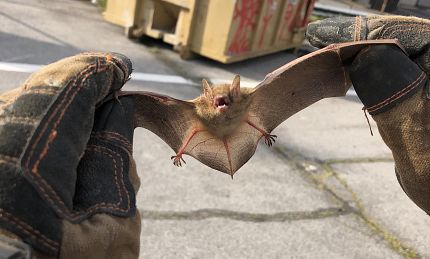 Bat Removal | Complete Animal Removal | Tennessee